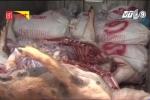 Hãi hùng thương lái thu mua lợn chết giá 5.000 đồng/kg bỏ mối cho lò mổ