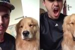 Clip: Chó cưng bắt chước biểu cảm của chủ khiến dân mạng phì cười