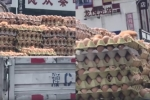 Video: Nắng nóng, trứng nở thành gà con ngay trên đường vận chuyển