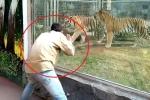 Nam du khách 'giỡn mặt tử thần', bày trò kích động hổ trong sở thú