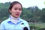 Cô giáo bỏ nghề về quê trồng trà xanh kiếm 150 triệu đồng/tháng