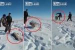 Clip: Bị trúng đạn nằm thoi thóp, sói vẫn vùng dậy tấn công thợ săn