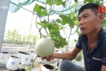 Anh thợ sửa xe từ tay trắng thành tỷ phú nhờ vườn dưa lưới bạc tỷ