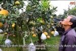 Video: Mục sở thị cây cho 10 loại quả của lão nông Hà Nội