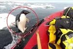 Clip: Chim cánh cụt nhảy bổ lên thuyền, 'chào' đoàn thám hiểm ở Nam Cực
