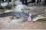 Nghẹt thở khoảnh khắc tóm sống con cá sấu làm loạn đảo Phuket trong vòng hơn chục ngày