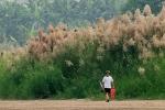 Cuộc sống bí ẩn ở bãi giữa Sông Hồng