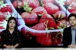 Video: Thêm xoài bị găm kim, các siêu thị Australia ngưng bán kim khâu