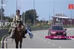 Phi ngựa hàng trăm km tới Nga để xem World Cup