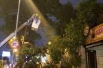 Nhánh cây gãy đè sập tường nhà dân tại TP.HCM