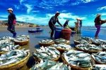 Điểm tên những mặt hàng nông, lâm, thủy sản mang hàng tỷ USD về cho Việt  Nam