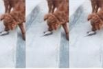 Hài hước cảnh chú chó bất lực đuổi theo khi bị chim sẻ lừa cho vố đau