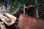 'Lâm tặc' thảm sát rừng Quảng Nam: Đề nghị cán bộ kiểm lâm nghỉ hưu sớm nếu không đủ năng lực
