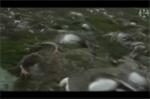 Đàn tuần lộc hơn 320 con bị sét đánh chết la liệt trên núi