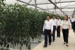 Anh: Duong pho Hai Phong 'thay ao' chao don nha lanh dao Trieu Tien du kien den tham hinh anh 13