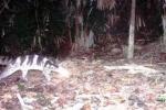 Phát hiện hai giống cầy quý hiếm đang bị đe dọa toàn cầu