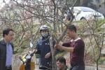 Những cành lê rừng mốc xanh giá chục triệu đồng hút khách sau Tết ở Hà Nội