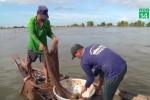 Video: Theo chân ngư dân săn cá linh mùa nước nổi