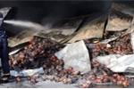 Hơn 200 tấn thanh long sắp xuất kho bị thiêu rụi ở Bình Thuận