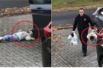 Clip: Con gái nằm ườn ra đất không chịu đi bộ và phản ứng 'khó đỡ' của bố