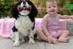 Suýt chết trong lúc ngủ, bé gái 1 tuổi được chó cưng cứu mạng