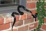 Video: Công ty môi giới bất động sản bán nhà nhung nhúc rắn cho dân