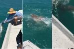 Video: Đàn cá mập bò hung hăng đớp gọn thành quả của ngư dân