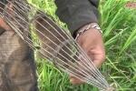 Tròn mắt xem trai làng hò nhau đi bắt chuột đồng bằng rọ sắt cực nhanh ở Hà Nội