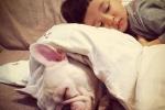 Thường xuyên ngủ chung với thú cưng sẽ dễ mắc 10 bệnh dưới đây