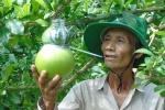 Trái cây miền Tây in chữ 'Phúc - Lộc - Thọ' đắt hàng trước Tết