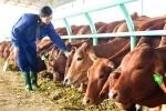 Đại gia chứng khoán chạy theo trào lưu trồng rau, nuôi lợn