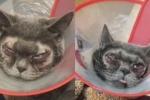 Đưa mèo đi cắt mí, nhà giàu Trung Quốc bị chỉ trích dữ dội
