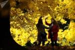 Ảnh: Cảnh sắc tuyệt vời của mùa thu trên toàn thế giới