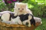 Thị trấn nơi chó, mèo có quyền công dân như con người