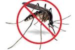 Người Hà Nội sốt vó tìm cách tiêu diệt muỗi phòng tránh sốt xuất huyết