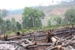 'Nước mắt' của rừng và tiếng cầu cứu của người dân Bắc Giang