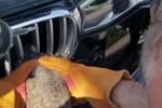 Video: Cưa ô tô, cứu chim mắc kẹt vào đầu xe