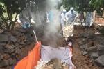 Quảng Ninh tiêu hủy đàn lợn mắc dịch tả lợn Châu Phi tại Đông Triều