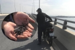 """Nghi vấn """"đinh tặc"""" hoành hành trên cầu vượt biển dài nhất Việt Nam"""