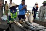 Thủ tướng nghiêm cấm dùng cá chết ở hồ Tây làm thực phẩm