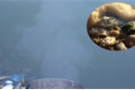 Hàng chục cống xả thải trực tiếp ra Hồ Tây đen ngòm, bốc mùi hôi thối