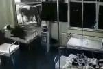 Đang nằm trong bệnh viện, bệnh nhân bị xe tải lao thẳng vào giường