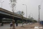 Hàng loạt cây chết khô trên phố Hà Nội được thay thế