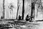 Tổng tiến công Tết Mậu Thân 1968: Những dấu ấn nổi bật