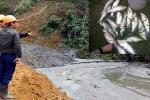 Cá chết hàng loạt sau sự cố vỡ đập bùn thải quặng ở Nghệ An