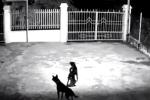 Clip: Chó hung tợn dọa 2 cẩu tặc 'co giò' chạy trối chết