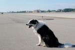 Chó thả rông liên tiếp chạy vào đường băng các cảng hàng không
