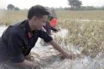 Công an Thái Bình ngâm mình gặt lúa giúp dân chạy bão số 11