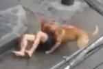 Cầm gậy giải cứu người đàn ông bị chó pitbull cắn trên phố