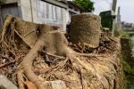 Hà Nội: Dẹp cướp vỉa hè, chặt luôn gần trăm cây xanh